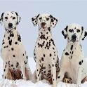Dog Puzzle: Dalmatian icon