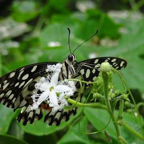 Butterfly by Chhaditya Parikh - Animals Other