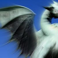 Dragon di