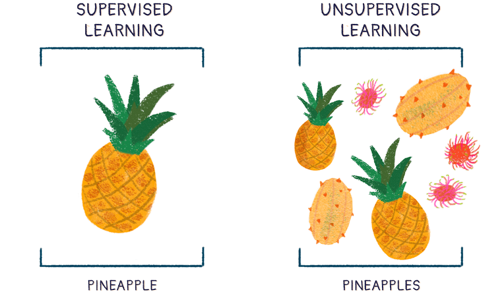 Two brackets beside each other detail the nature of supervised vs. unsupervised learning. Supervised learning contains a single pineapple; unsupervised learning contains multiple fruits of different, weird and wonderful shapes and sizes.