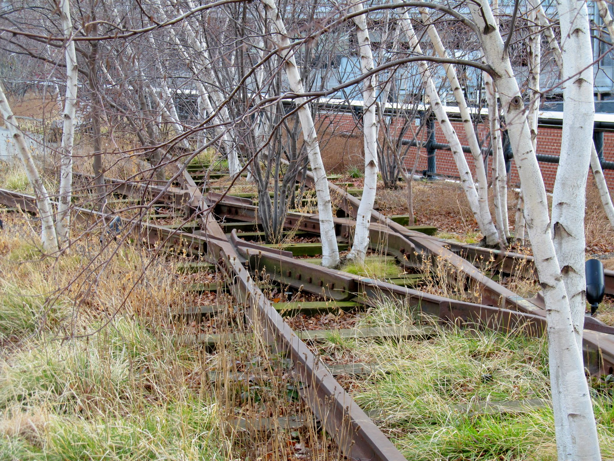 Photo: High Line rails overgrown with trees