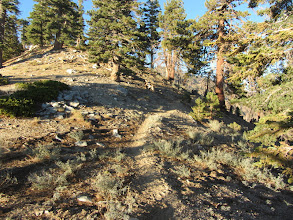 Photo: Heading north on Hawkins Ridge Trail skirting the final knob before the PCT junction