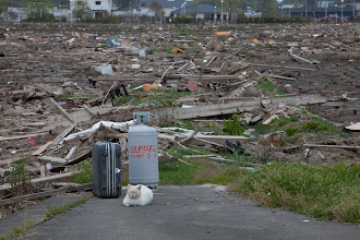Photo: May 6, 2011. Odaka, Fukushima, Japan. Inside the Evacuation Zone. Near the ocean lie the remains of residential homes bashed to bits by the tsunami.   The abandoned cats seem to fall back on their feral nature and fair better than many of the dogs.