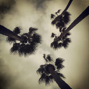Looking Up by Jessica Mercado - Nature Up Close Trees & Bushes ( trees )