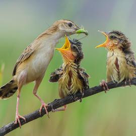 Love & Care by Leovin Agustim - Animals Birds (  )