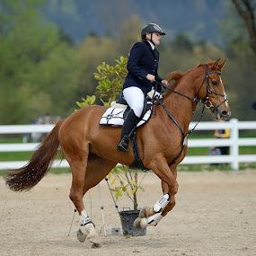 Team work by Bostjan Pulko - Sports & Fitness Other Sports ( horse, equestrian )