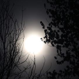Full moon by Theresa Murray - City,  Street & Park  Night