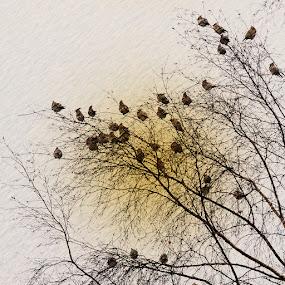 Together again by Juliusz Wilczynski - Digital Art Animals