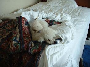Photo: En efecto, a Niko le gusto lo amistoso para las mascotas