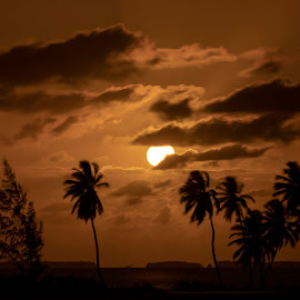 Mysterious full moon rising over the coconut trees by Clarissa Human - Uncategorized All Uncategorized ( full moon, moon, moonlight, nightscape, australia, moonrise, silhouettes, night photography,  )