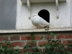 Photo: Dovecote in the gardens of Felbrigg Hall.