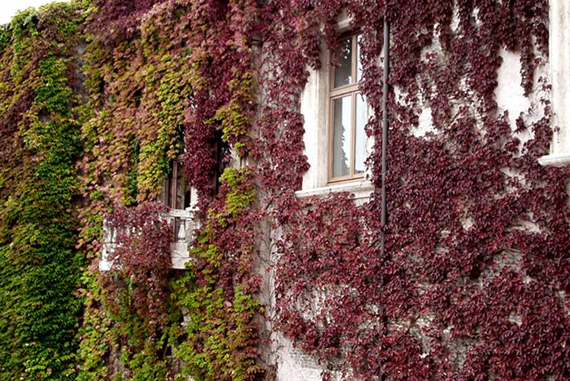 palazzo vestito d'autunno di rita18