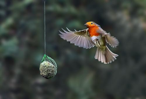 arrived at last ! by Ghislain Vancampenhoudt - Animals Birds