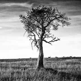 Stand Alone by Ebtesam Elias - Black & White Landscapes ( savannah, masai mara, kenya, landscapes, travel photography )