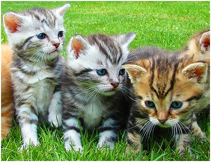玩免費解謎APP|下載猫ジグソーパズル app不用錢|硬是要APP