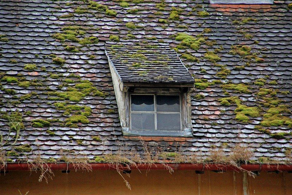 Window, Roof, Roof Windows, Lost Places, Old