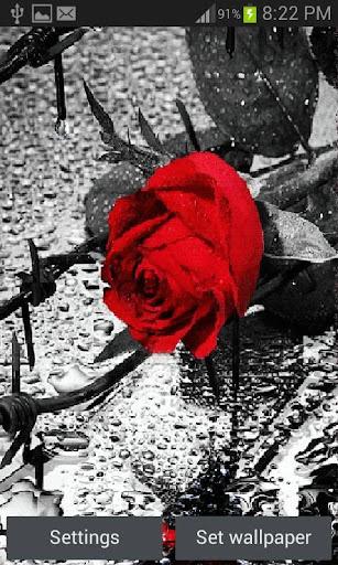 Rose Bleeding LWP