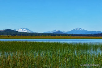 Photo: Wetlands at the mouth of Odell Creek, Davis Lake