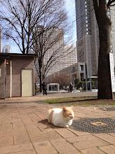 Photo: Meow