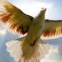 flying birds live wallpaper
