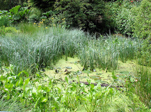 Photo: Pond at PowellsWood