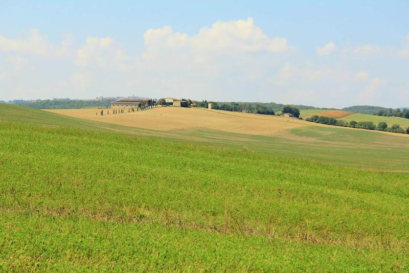 fattoria con campo di grano di Daniele 86