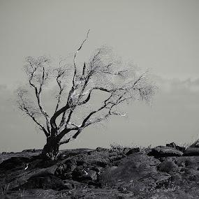 Barren by Aaron Gould - Black & White Flowers & Plants
