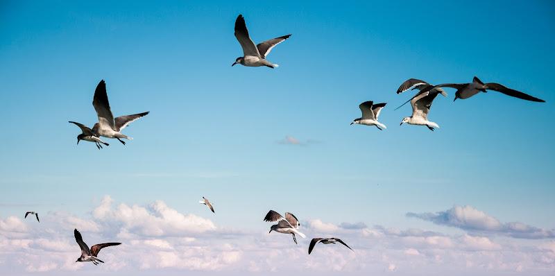 Senso di Libertà di marikarossiphotography