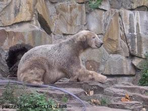 Photo: Eisbaerchen Knut und der Schlauch :-)
