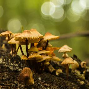 Mushrooms by Viorel Stanciu - Nature Up Close Mushrooms & Fungi ( mushroom, plant, seasonal, grass, roots, fungus, forest, botanical, much, boletus, environment, nature, autumn, meadow, trees, stem, natural, gourmet, meal, mycelium,  )