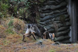 Photo: Bob på vei ned i bunkersen
