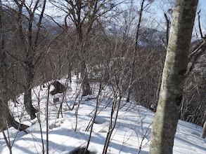雪が少なく枝が邪魔に