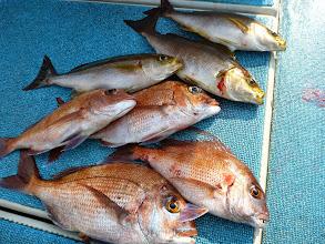 Photo: オガワさんの釣果。 お昼から追い上げました。 朝は全くでしたもんね。