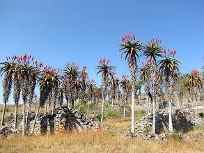 Photo: Great Zimbabwe