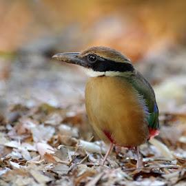 by Ken Goh - Animals Birds