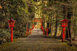 Photo: A path lined with lanterns in the woods of Hakone
