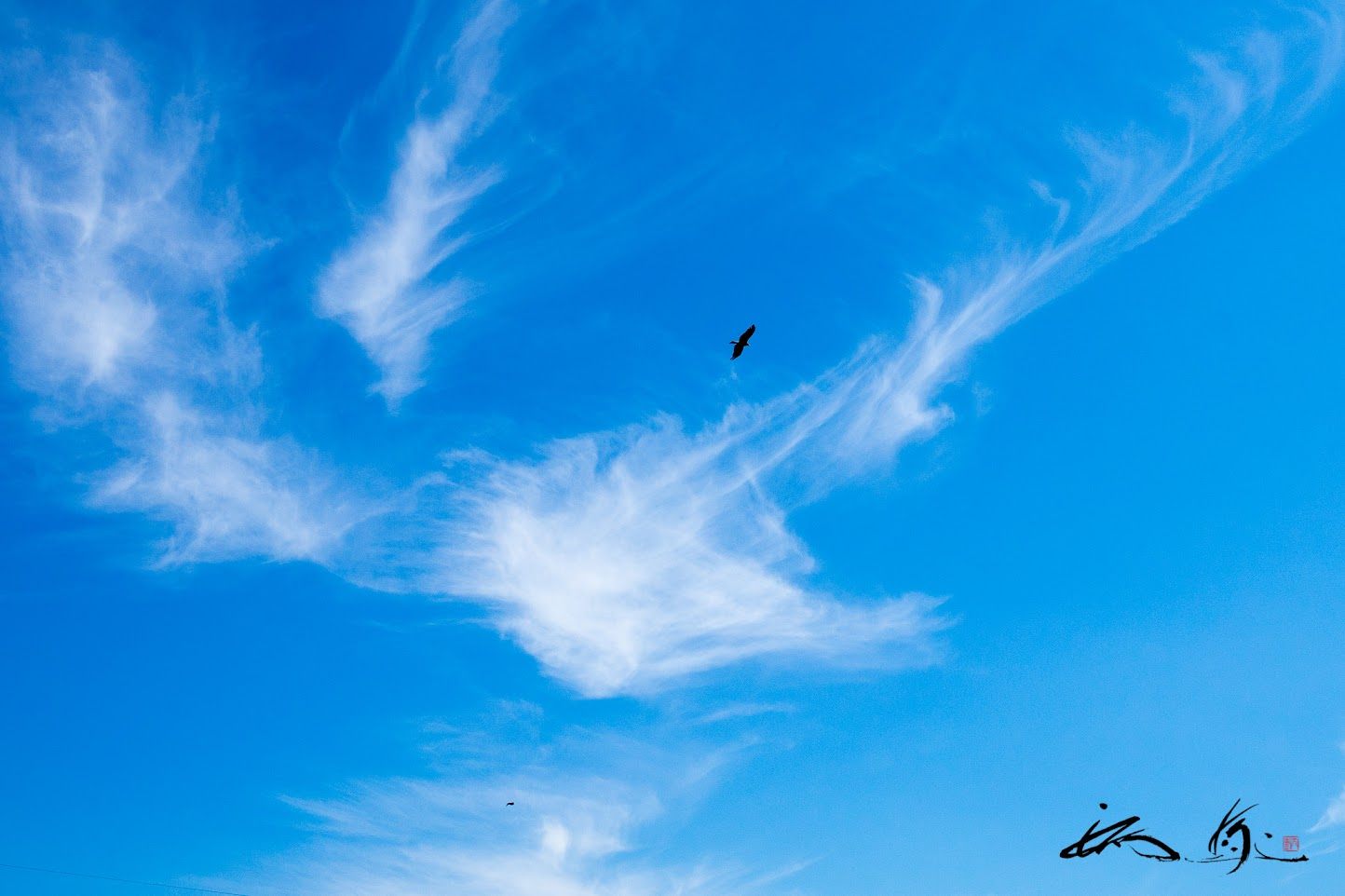 大空高く飛行する鷹