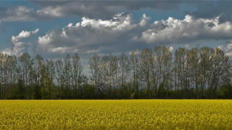 Orizzonte di nubi di iento