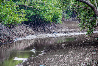 Photo: Throughout their walk the kids could learn that mangroves are home to several species of animals, some of them really beautiful and elegant, as this white egret resting in the canal.