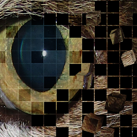 Eye by Marissa Enslin - Digital Art Things