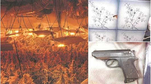 """Secuestrado en un cultivo de marihuana: """"Me apuntó con una pistola en la cabeza"""""""