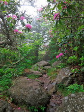 Photo: Beautiful Rhododendron Lined Path