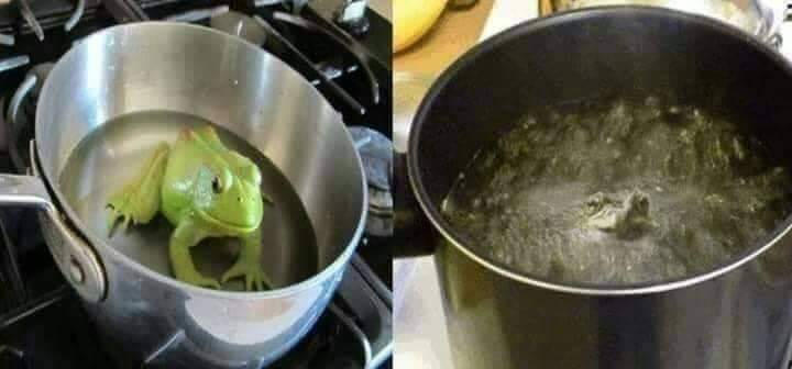 Boiling Frog 🐸 Syndrome is a Popular Metaphor | What Happens if You Throw Frog in The Hot Water?