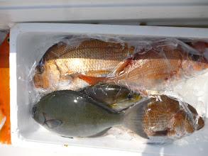 Photo: シメてる魚が、真鯛、オナガ・・・。