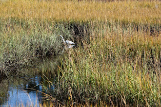 Photo: a bird in the marsh