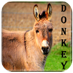 Free Donkey Sounds Icon