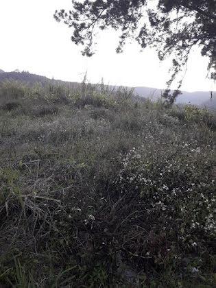 Vente terrain 3215 m2