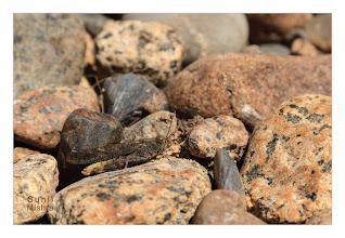 Photo: Eastern Sierras-20120717-749