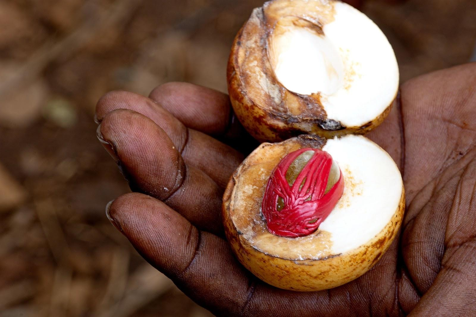 Nutmeg: from one of the beautiful islands in Indonesia | Outside Suburbia