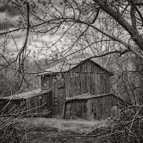 In The Woods by Don Kuhnle - Black & White Buildings & Architecture ( farm, barn, black and white, virginia, fredericksburg, woods, rustic )